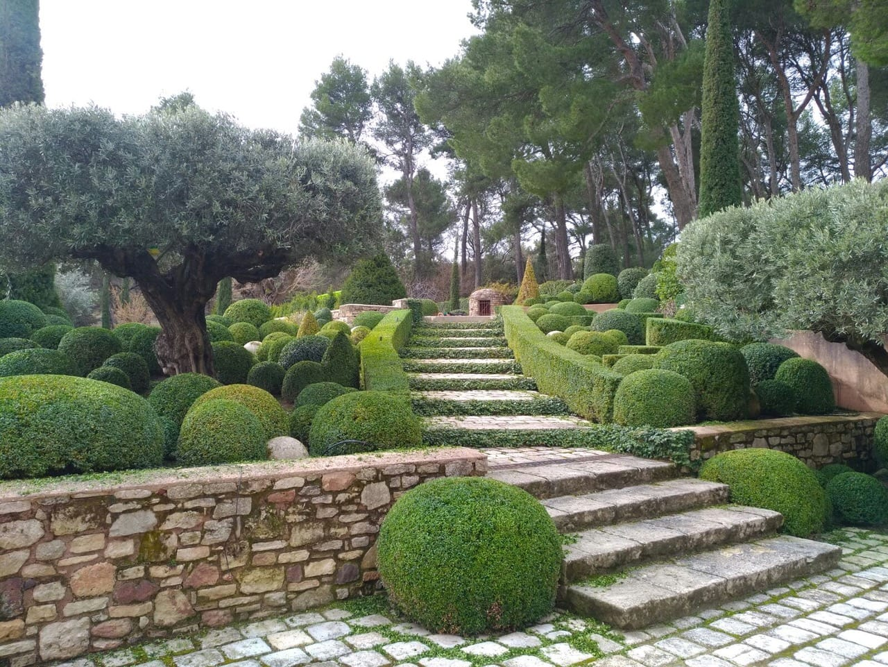 box cypress olive trees structured design garden trends 2018