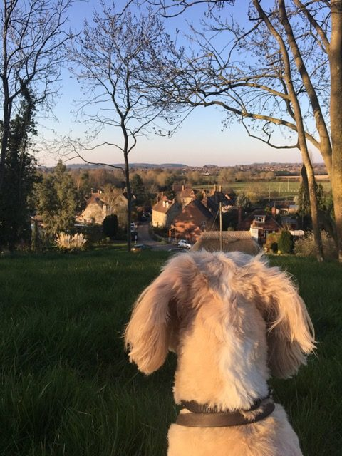 wishlist, dog out in countryside, looking down from top of hill over a village